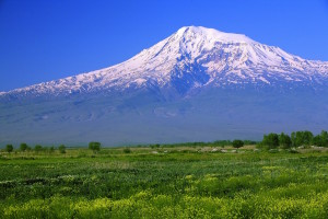 Türgi Ararat